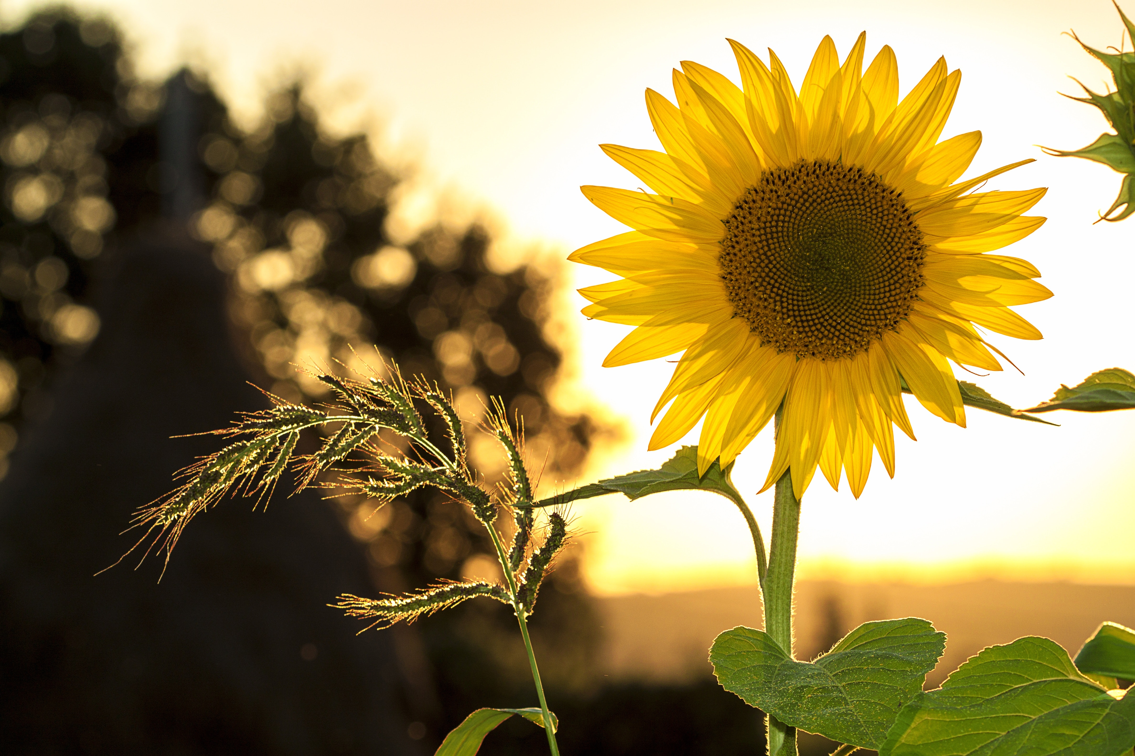 vitamina d energia del sole