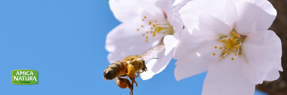 Allergia in Primavera, la relazione con gli alimenti